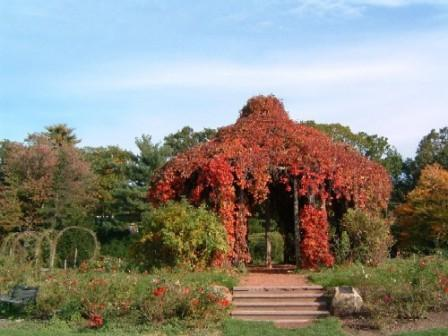 Fall brings vibrant colors to the wedding gazebo in the Elizabeth Park Rose Garden.