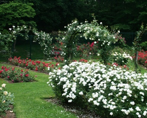 Take your wedding photos at the Rose Garden in Norwich, CT!
