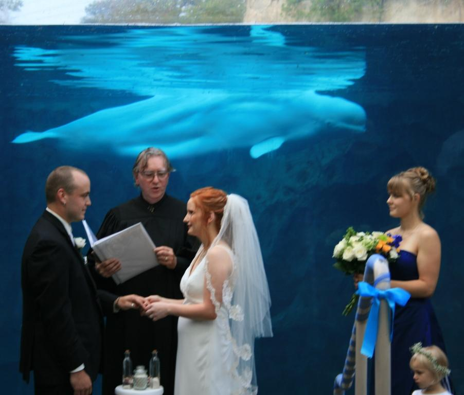During the exchanging of wedding rings the whales watched us.